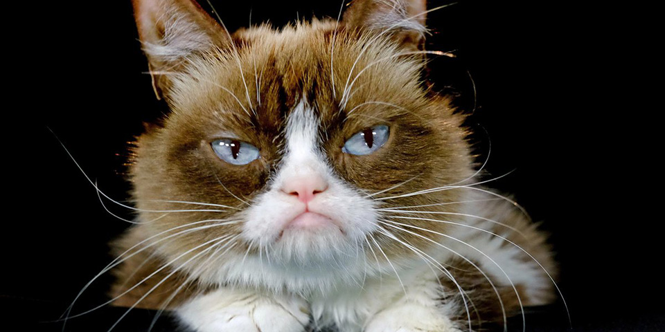 Grumpy-Cat-Android-Game